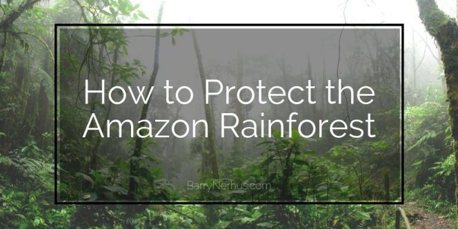 Barry-Nerhus-_-how-to-protect-the-amazon-rainforest