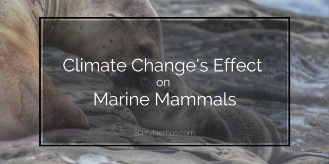 climate-change-marine-mammals