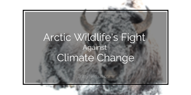 arctic-wildlife